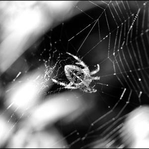 Glowing spider