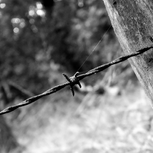 Barbed Wire No 2
