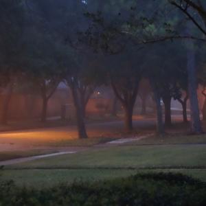 Light Fog before Sunrise