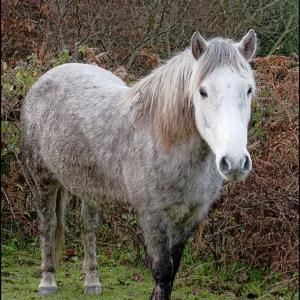 A hesitant pony
