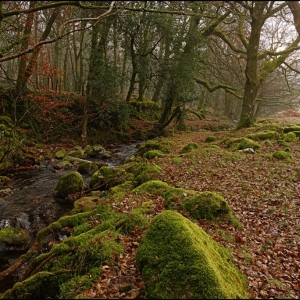 Down by the Glaze Brook
