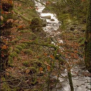The Glaze Brook