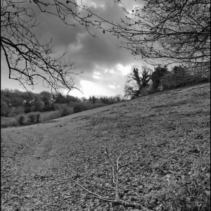 Looking towards Lady's Wood