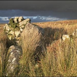 Ruined wall on Trowlesworthy Warren