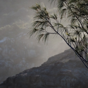 Casuarina and salt mist