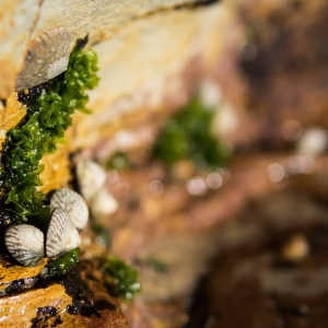 Miniature in shell life