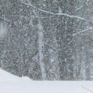 FZ200_winter_storm_gater_004_Medium_
