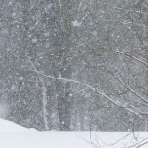 FZ200_winter_storm_gater_005_Medium_