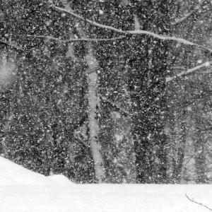 FZ200_winter_storm_gater_004_Medium_-001