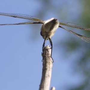 Dragonfly take off
