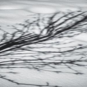 treeshadow2