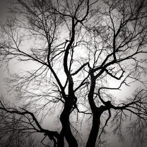 treevignette