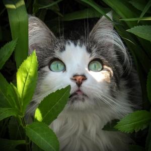 Fuzzy in the Jungle