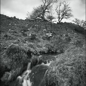 Tumbling brook